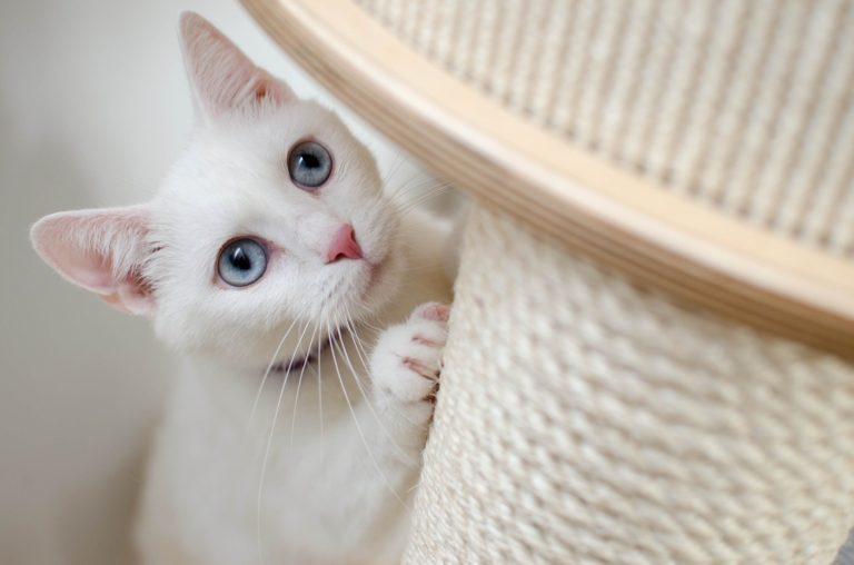 Como evitar que seu gato arranhe tudo?