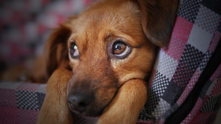 Como ensinar seu cão a fazer xixi no lugar certo?