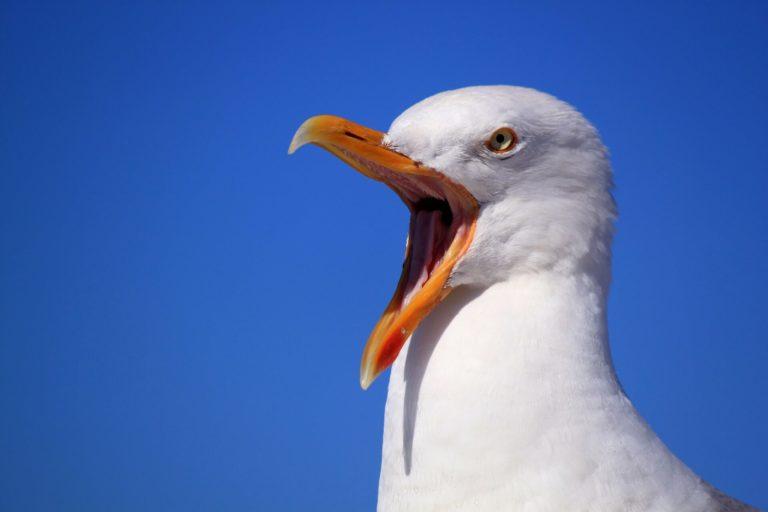 Pássaro ferido – o que fazer?